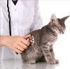 Ветеринарные клиники в Ртищево